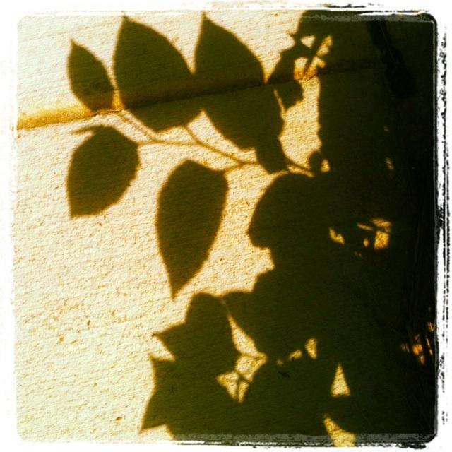Instagram Leaves Shadow
